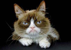 مرگ گرامپی کت، گربه معروفی که میلیون ها هوادار دارد