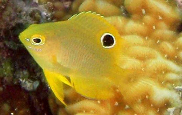 روش جالب دوشیزه ماهیها برای فرار از دست دشمن