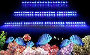 انتخاب نور و سیستم روشنایی مناسب برای اکواریوم اب شور