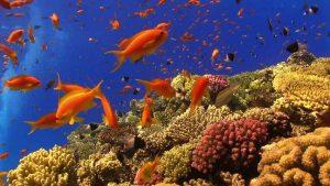 شناخت و نگهداری آنتیاس ماهیان