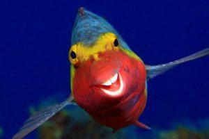 لبخند ماهی یکی از تصاویر برگزیده مسابقه عکاسی کمدی حیات وحش ۲۰۲۰